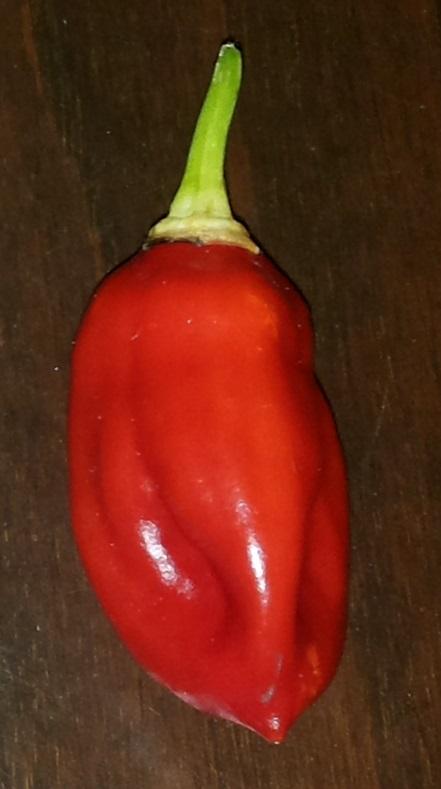 Pepper3.jpg